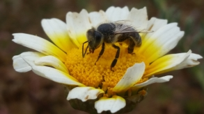 Bee-Friendly Gardening on a Budget