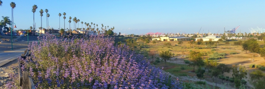 10 Surprising South Bay Neighborhood Features That Add Value to Your House