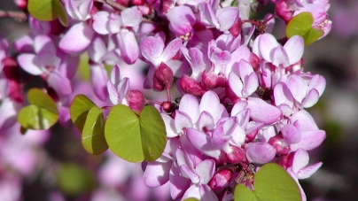 10 Drought Tolerant California Native Plants