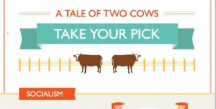 A Tale of Two Cows