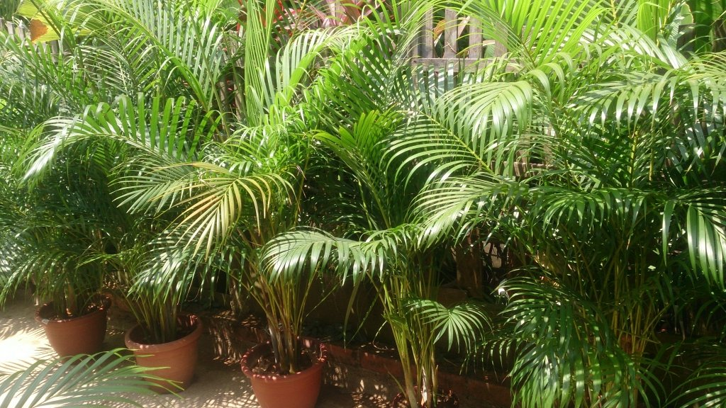 15 Detoxifying House Plants For Cleaner Air Best Of The