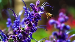 Attracting Beneficial Bees to Your Garden