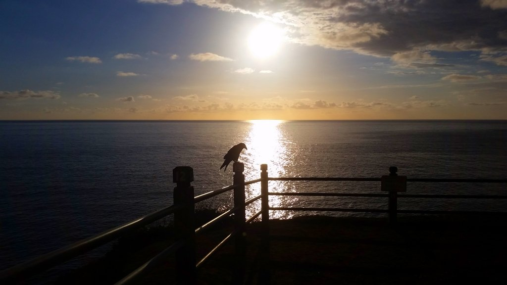 Point Vicente Park Sunset with Crow