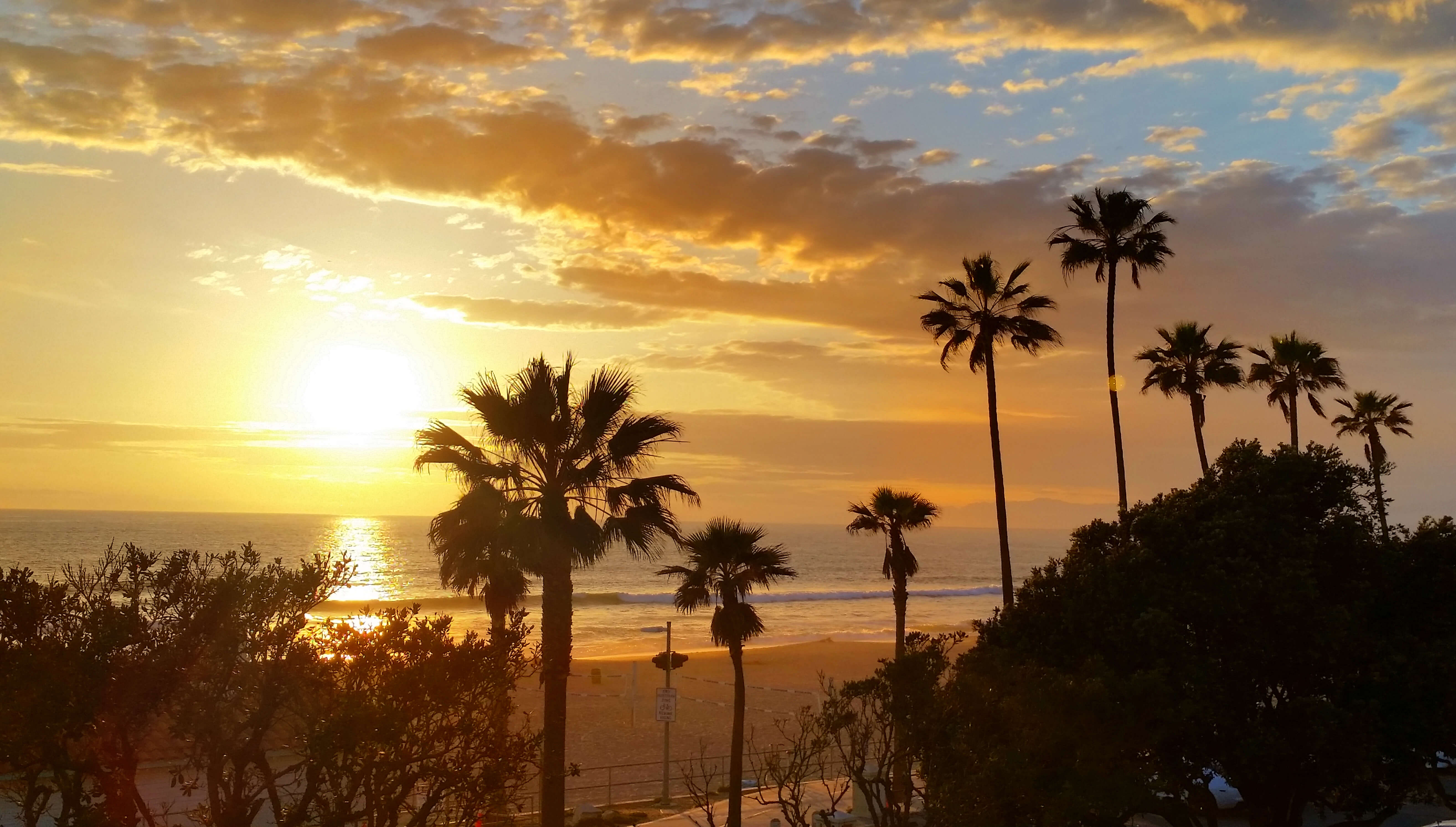 Palm Trees | Best of the South Bay