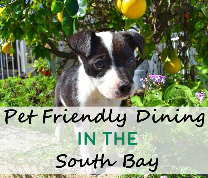 pet-friendly-dining-in-the-south-bay