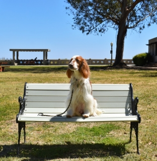 Gallery: Doggie Photo Day – Point Fermin Park