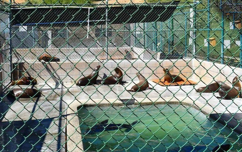 Marine Mammal Care Center at Fort MacArthur | Best of the