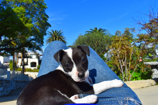 Dog-Friendly Dining in the South Bay