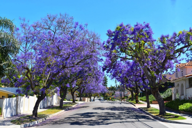 FREE Shade Trees Delivered to Your Home